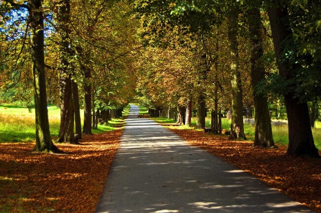 Autumnal avenue within Favoritepark
